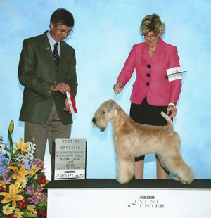 GCH Lovesong's Affair With Jazz